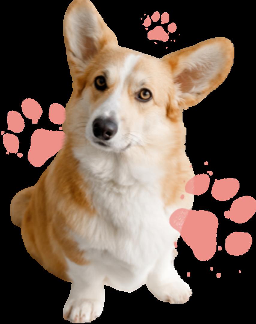 dog brown